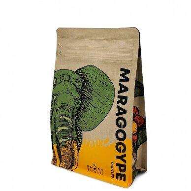 "Kavos Pupelės ""Maragogype"" 250g. 3"